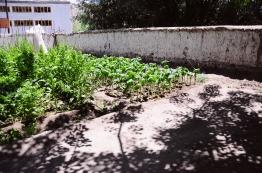 民宿的前院菜圃