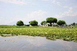 達爾湖上的蓮花公園