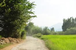 沿途一大片一大片綠油油的稻田,跟台灣的鄉村景緻倒是非常相似