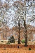 秋天院內的楓樹轉為一片紅