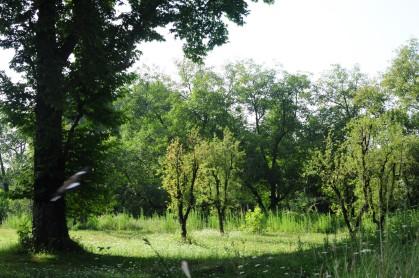 花園後方的大草地
