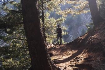 高山針葉林區
