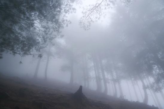 走在濃霧和泥濘裡