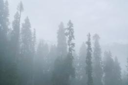 有一陣霧襲來!