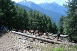第四天下山,遇到正遷徙上山,準備夏季放牧的吉普賽一家
