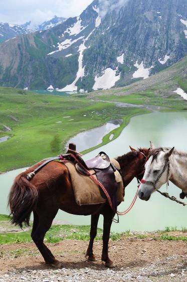 我們騎乘的馬匹