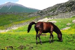 似乎只有馬兒便便時才會將尾巴高舉免於弄髒