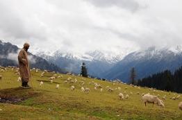 牧羊人和他的羊群
