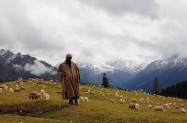 牧羊人和他的羊群。2015年9月下旬