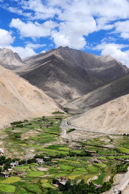 青稞梯田是拉達克典型的農作物,沿著河流造就了沙漠綠洲,而山幾乎一片荒蕪