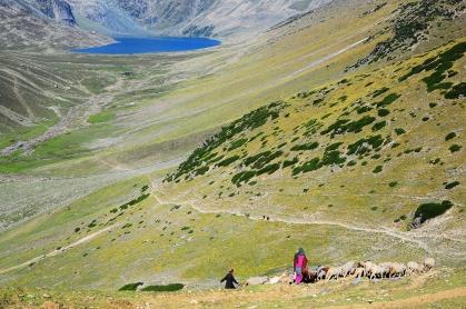 遷徙中的牧羊人。2016年9月上旬