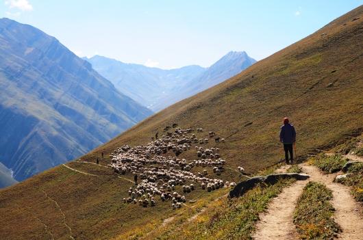 往Gadsar湖的路上常見大片羊群