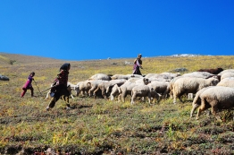 遷徙中的牧羊人家。2016年9月上旬