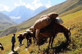 馱運羊毛的馬匹。2016年9月上旬