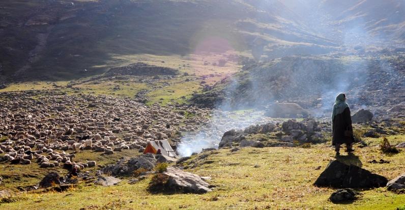 這片碩大的羊群從Vishansar營區遷徙至此。2016年9月上旬