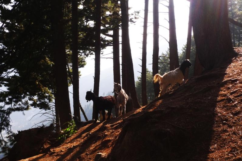 Linnie Traveler / 2014 Kashmir Gangabal Lakes Trekking