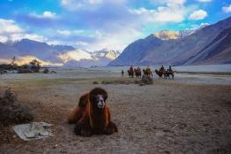 Linnie Traveler / Nubra Valley