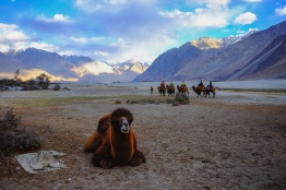 Linnie Traveler / Nubra Valley